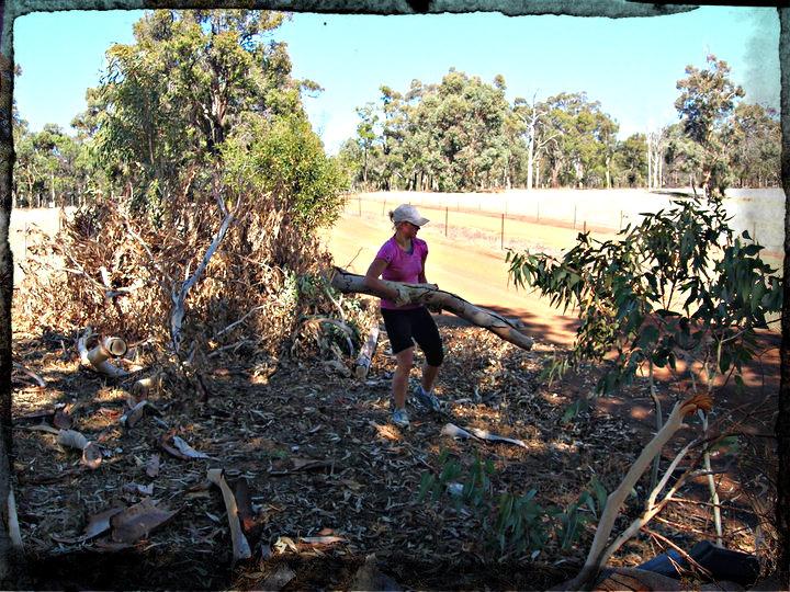 Puuhommissa Länsi-Australiassa1